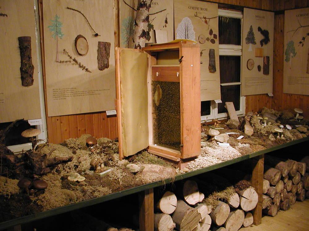 Waldmuseum Bräunlingen Ausstellung